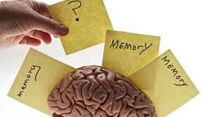 Plant Based Nutrition to Prevent Alzheimers